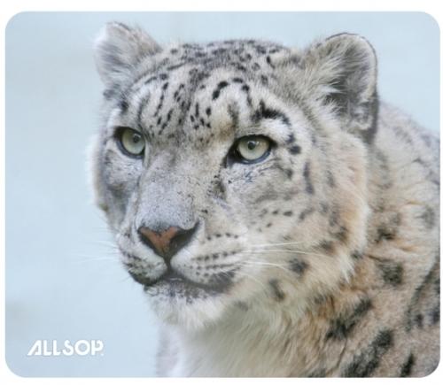 Allsop Podložka pod myš - Sněžný leopard 06417